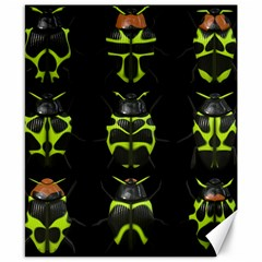 Beetles Insects Bugs Canvas 8  x 10