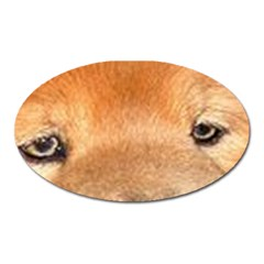 Chow Chow Eyes Oval Magnet