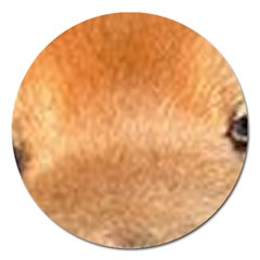 Chow Chow Eyes Magnet 5  (Round)