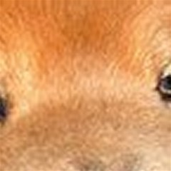Chow Chow Eyes Magic Photo Cubes