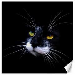 Face Black Cat Canvas 12  x 12