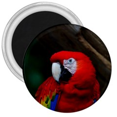 Scarlet Macaw Bird 3  Magnets