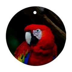 Scarlet Macaw Bird Ornament (Round)