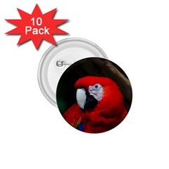 Scarlet Macaw Bird 1.75  Buttons (10 pack)