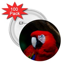 Scarlet Macaw Bird 2.25  Buttons (100 pack)