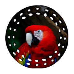 Scarlet Macaw Bird Ornament (Round Filigree)