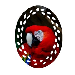 Scarlet Macaw Bird Oval Filigree Ornament (Two Sides)