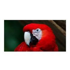 Scarlet Macaw Bird Satin Wrap