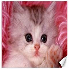 Cat Animal Kitten Pet Canvas 12  x 12