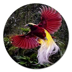 Cendrawasih Beautiful Bird Of Paradise Magnet 5  (Round)