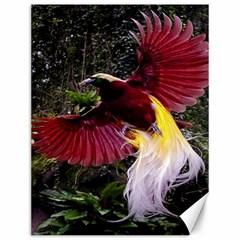 Cendrawasih Beautiful Bird Of Paradise Canvas 12  x 16