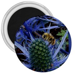 Chihuly Garden Bumble 3  Magnets