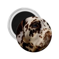Dalmatian Liver 2.25  Magnets