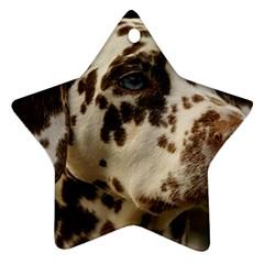 Dalmatian Liver Ornament (Star)