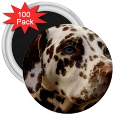 Dalmatian Liver 3  Magnets (100 pack)