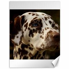 Dalmatian Liver Canvas 36  x 48