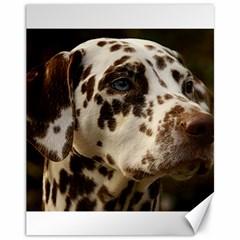 Dalmatian Liver Canvas 11  x 14