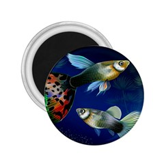 Marine Fishes 2.25  Magnets