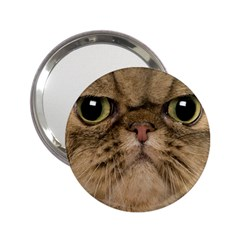 Cute Persian Catface In Closeup 2.25  Handbag Mirrors