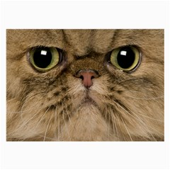 Cute Persian Catface In Closeup Large Glasses Cloth (2-Side)