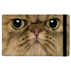Cute Persian Catface In Closeup Apple iPad 2 Flip Case