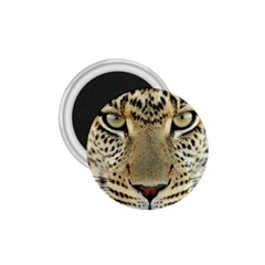 Leopard Face 1.75  Magnets