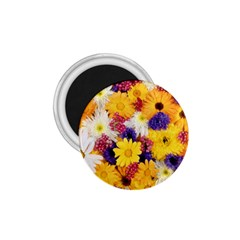 Colorful Flowers Pattern 1.75  Magnets