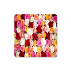 Rose Color Beautiful Flowers Square Magnet