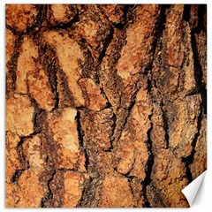 Bark Texture Wood Large Rough Red Wood Outside California Canvas 20  x 20