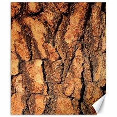 Bark Texture Wood Large Rough Red Wood Outside California Canvas 20  x 24