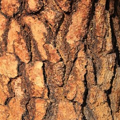 Bark Texture Wood Large Rough Red Wood Outside California Magic Photo Cubes