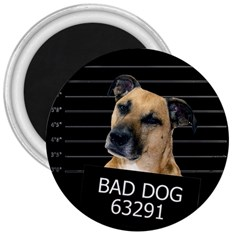 Bed dog 3  Magnets