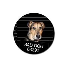 Bed dog Magnet 3  (Round)