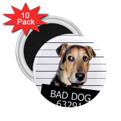 Bad dog 2.25  Magnets (10 pack)