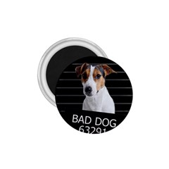 Bad dog 1.75  Magnets