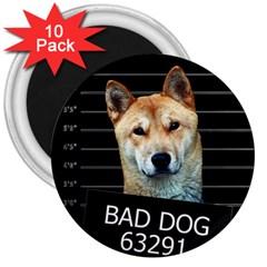 Bad dog 3  Magnets (10 pack)