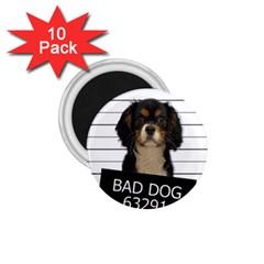 Bad dog 1.75  Magnets (10 pack)