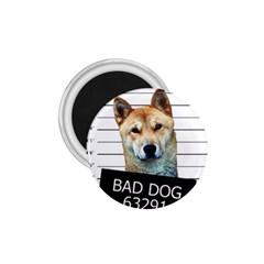 Bad dog 1.75  Magnets
