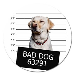 Bad dog Magnet 5  (Round)
