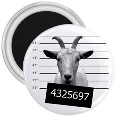 Criminal goat  3  Magnets