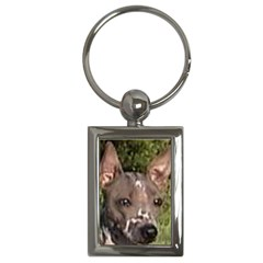 American Hairless Terrier Key Chains (Rectangle)