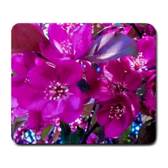 Pretty In Fuchsia Large Mousepads