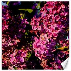 Lilacs Canvas 16  X 16