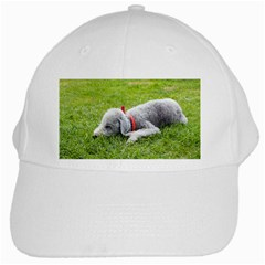 Bedlington Terrier Sleeping White Cap