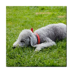 Bedlington Terrier Sleeping Tile Coasters