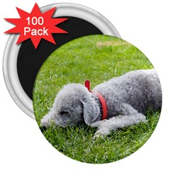 Bedlington Terrier Sleeping 3  Magnets (100 pack)