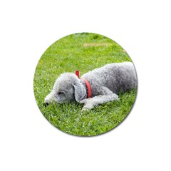 Bedlington Terrier Sleeping Magnet 3  (Round)