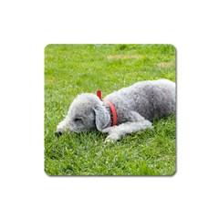 Bedlington Terrier Sleeping Square Magnet
