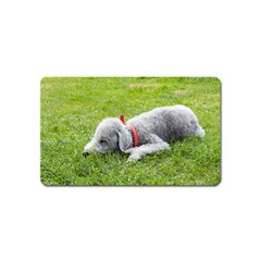 Bedlington Terrier Sleeping Magnet (Name Card)