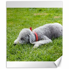 Bedlington Terrier Sleeping Canvas 8  x 10